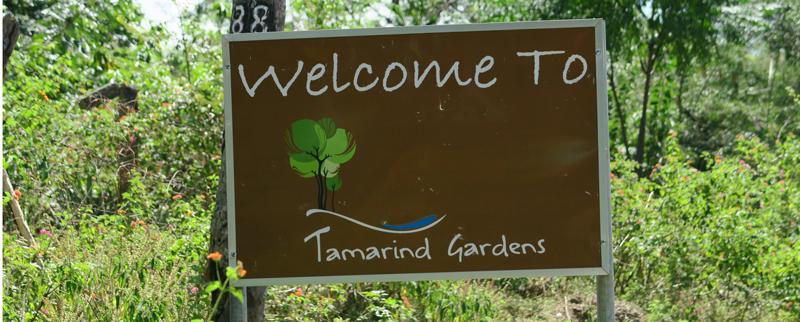 Tamarin-logo